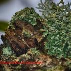 Moss Portrait