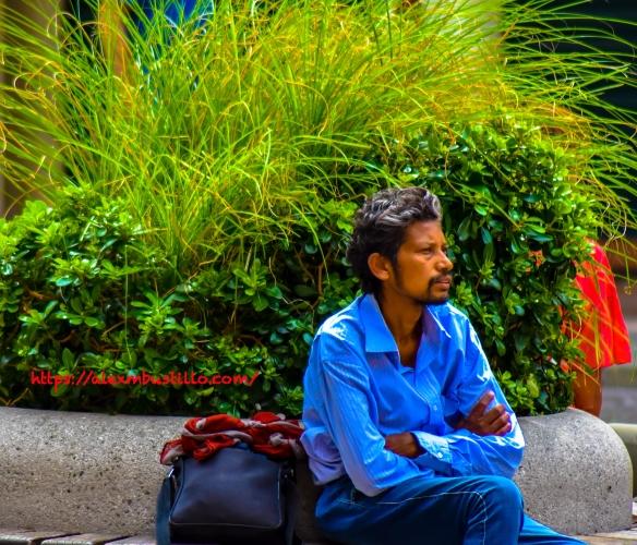 Treviso Piazza dei Signori Portrait